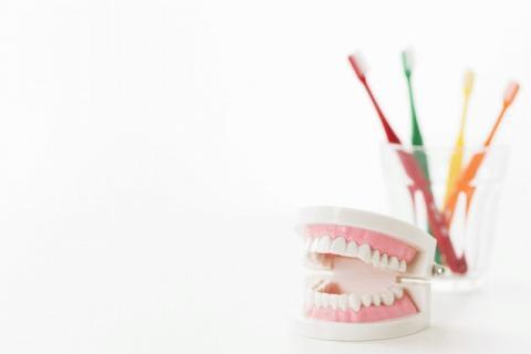 歯ブラシと歯の模型